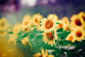 花朵 风景
